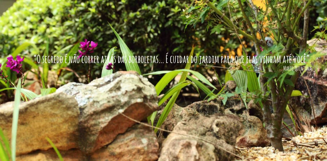 Jardim casa Elo Teixeira (15)