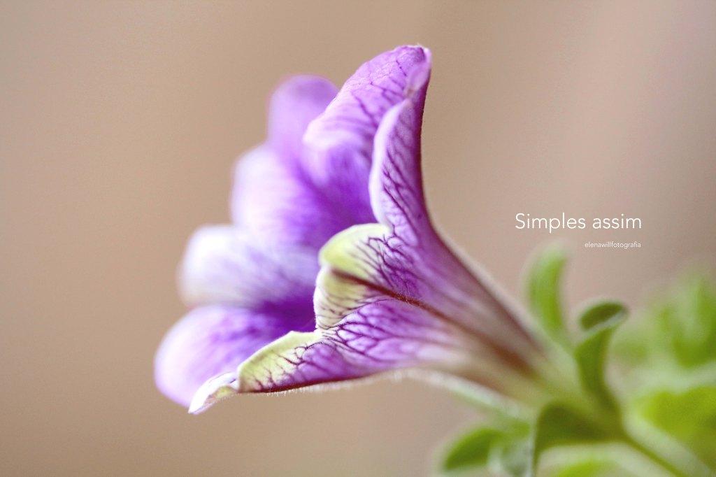 simples assim lilas