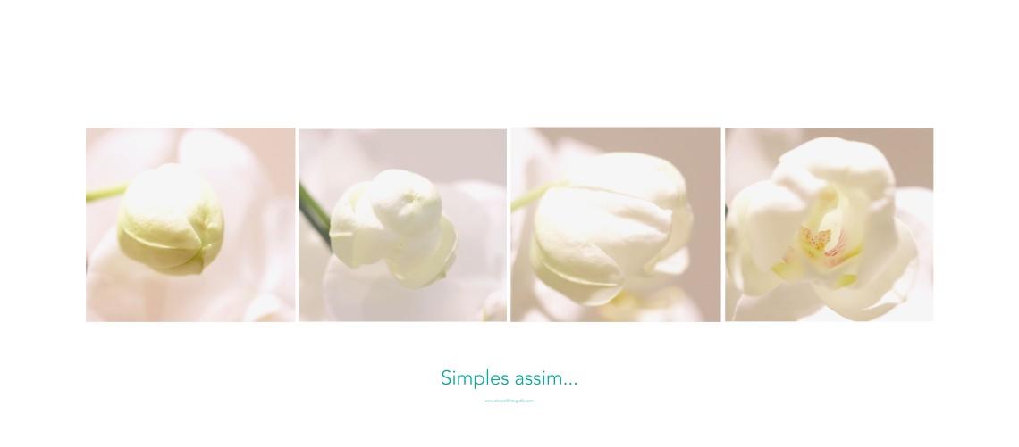 simples assim orquidea_edited-1